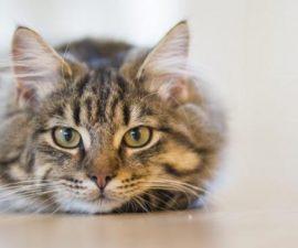Cara Merawat Kucing yang Sering Diabaikan